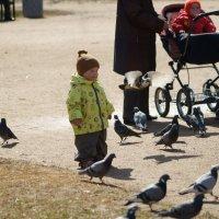 кадр перед ребёнком (не сразу виден голубь) :: Дмитрий Редьков