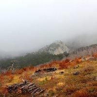 Быстро бегущий туман :: Nata S
