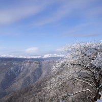 Зимний ясный день :: Марина Рыкова