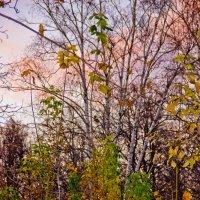 Разноцветная осень :: Роман Александрович