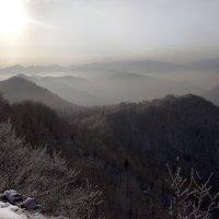 Зимний туман :: Марина Рыкова