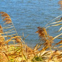 ветер в камышах :: Marina Timoveewa