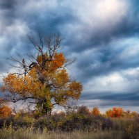 Осень.... :: Александр Афромеев