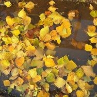 Осенние листья :: Григорий Азатян