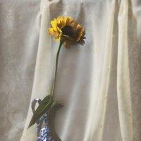 цветок :: Жанна Голубцова