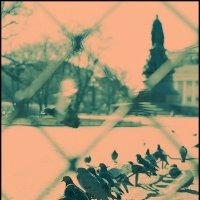 """Обратный cross по Питеру. Голубятня """"У Екатерины"""" :: Макс Балакин"""
