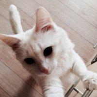 Кошка Лиза :: Александр Игольников