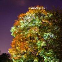 3D дерево :: Анжелика Литвинова