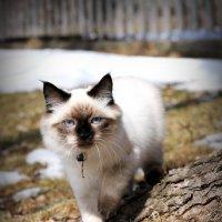 Pet :: Olga Vang