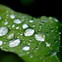 дождь :: lev