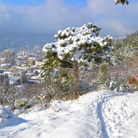 Снег в Ялте :: Александр Right