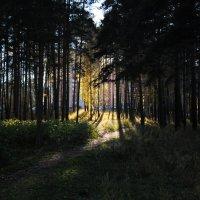 Луч солнца :: Ольга Пикулева