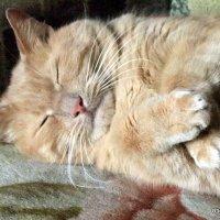 вы думаете,что я сладко сплю :: Олег Лукьянов