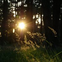 Вечер в лесу :: Александр Крупский