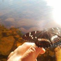 Бабочка :: Татьяна Ш