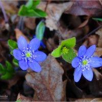 Цветы в лесу. :: Антонина Гугаева