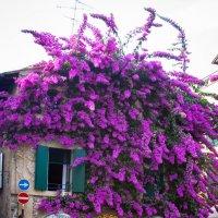 Цветочный домик :: Екатерина Максимова
