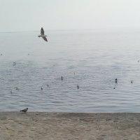 чайки :: Nata Alieva