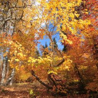 Осень :: Владимир Старовойтов