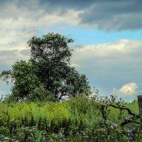 пейзаж с деревом :: павел бритшев