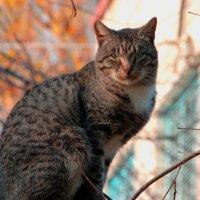 Ноябрский кот... :: ФотоЛюбка *