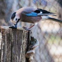Птичка... :: ФотоЛюбка *