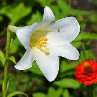 Цветы в нашем саду (этюд 1) :: Константин Жирнов