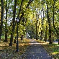 В кремлевском парке осенью (этюд 3) :: Константин Жирнов
