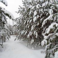 зимний лес :: Сергей Кунтиков