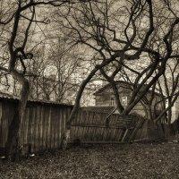 Старые деревья :: Анатолий Тимофеев