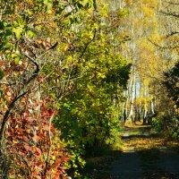 Краски осени :: Елена Привалова