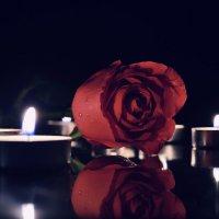 Роза :: Геннадий Краликаускас
