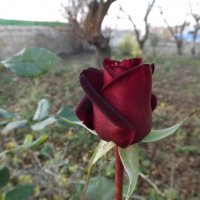 Живая кровь среди мертвой листвы :: Alchemist Богданов