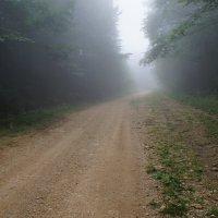 Дорога на альпийские луга :: Марина Рыкова