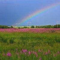 Цветущее поле и радуга. :: Наталья Юрова