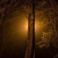 Вечерний парк :: Артур Моргун