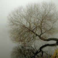 В тумане :: Николай Климович