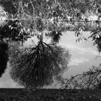 Отражения в реке :: G Nagaeva
