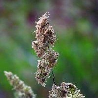цветок полевой... :: юрий иванов