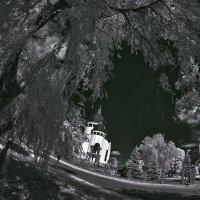 Сквозь ветви ивы... :: АндрЭо ПапандрЭо