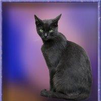 Кошачий портрет :: Владимир Кроливец