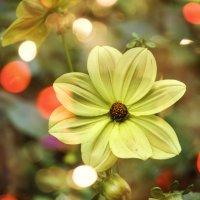 Цветок :: Владимир Кроливец