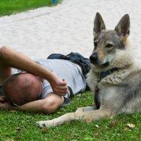 Хозяин отдыхает а волк охраняет :: Valeria Ashhab
