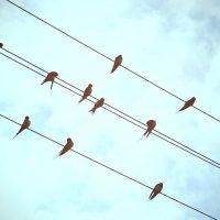 Птички :: Ольга Могдалёва