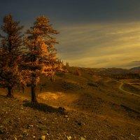 Рыжая долина :: Евгения Вишнякова