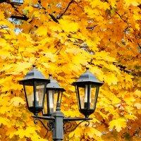 Осень :: Николай Симусёв