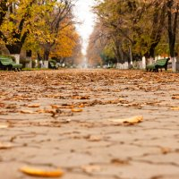 Осень в городском парке. :: Николай Симусёв