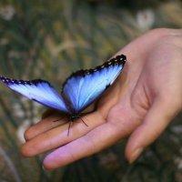 Бабочка :: Евгения Зарубина