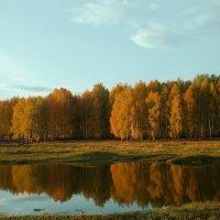 золотая осень :: альбина хабибуллина