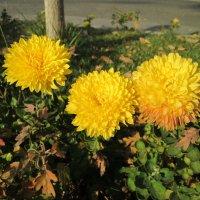 цветы у дороги :: юлия Силина